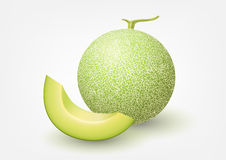 Melone del cantalupo, illustrazione di vettore della frutta Fotografie Stock