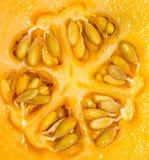 Melone della roccia Fotografia Stock