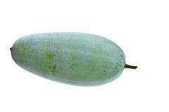 Melone di inverno Fotografia Stock