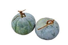 Melone di inverno, benincasa hispida Fotografia Stock Libera da Diritti