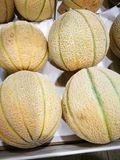 Melone do cantalupo Fotografia de Stock Royalty Free