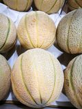 Melone do cantalupo Foto de Stock