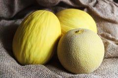 Melone giallo Fotografia Stock Libera da Diritti