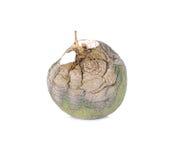 Melone marcio dal Giappone su un fondo bianco Immagini Stock Libere da Diritti
