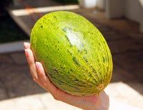Melone nella mano della ragazza Fotografie Stock Libere da Diritti