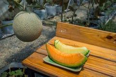 Melone in serra su agricoltura del campo Fotografia Stock Libera da Diritti