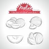 melone Stellen Sie von den frischen Früchten ein, ganz, halb und mit Blatt gebissen Auch im corel abgehobenen Betrag Getrennt auf stock abbildung