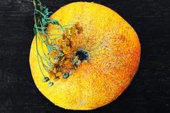 Melone und getrockneter Kamillenabschluß herauf Ansicht über dunklen Hintergrund Lizenzfreies Stockbild