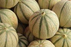 Melonen canteloupe Grün lizenzfreie stockbilder