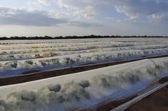 Melonenerzeugnis auf Brasilianer Northest Stockfoto