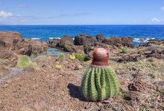Melonenkaktus auf karibischer Landschaft Lizenzfreie Stockfotografie