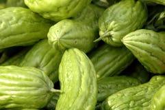 Melones amargos Imágenes de archivo libres de regalías