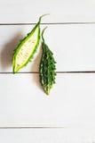 Melones amargos Imagen de archivo