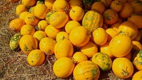 Melones amarillos maduros en pila en mercado callejero en mañana soleada metrajes