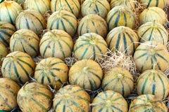 Melones de Cavaillon, cantalupo redondo maduro de la miel de los charentais yo imágenes de archivo libres de regalías