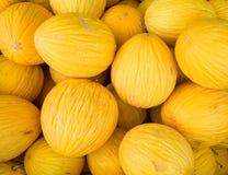 Melones de ligamaza Imagen de archivo libre de regalías