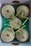 Melones de ligamaza costosos en Hokkaido, Japón foto de archivo libre de regalías