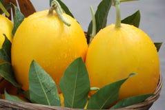 Melones dulces Imagen de archivo libre de regalías