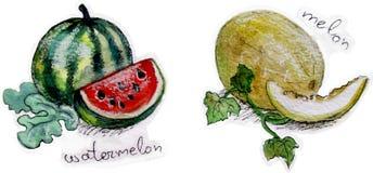 Melones en acuarela ilustración del vector