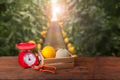 Melones en caja de madera Imagen de archivo libre de regalías