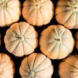 Melones netos Fotografía de archivo