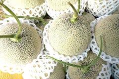 melones verdes orgánicos foto de archivo