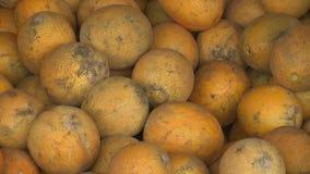 Meloni al mercato archivi video