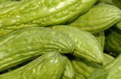 Meloni amari Fotografie Stock Libere da Diritti