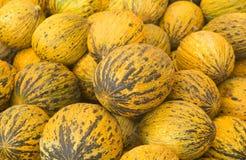 Meloni del turco del primo piano di vista Melone turco delizioso Molti meloni Azienda agricola di agricoltura del mercato del vas Immagini Stock Libere da Diritti