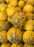 Meloni del turco del primo piano di vista Melone turco delizioso Molti meloni Azienda agricola di agricoltura del mercato del vas Immagine Stock