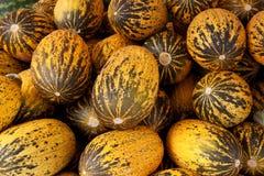 Meloni turchi dello zucchero Immagini Stock