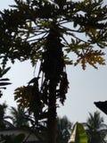 MELONOWA drzewo Z ptakiem obrazy royalty free