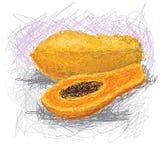 Melonowiec ilustracja wektor