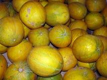 Melons Photos stock