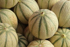 Melons canteloupe green Royalty Free Stock Images