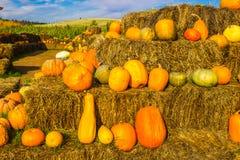 Melons et potirons à la ferme locale Photos libres de droits