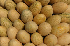 Melons fragrant sweet. Many yellow fragrant sweet ripe melons Stock Images