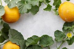 Melons frais de yelllow et vignes fleurissantes sur le fond en pierre blanc Image stock