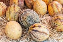 Melons Royalty Free Stock Photos