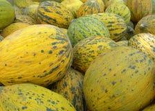 Melons mûrs Image libre de droits