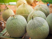 Melons melons ou de cantaloup verts de Japaneses Photographie stock