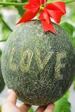 Melons ou plantes verts de melons de cantaloup Photo libre de droits