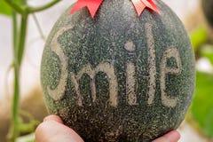 Melons ou plantes verts de melons de cantaloup Photo stock