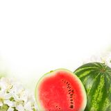 Melons Stock Photo
