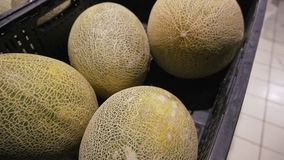 Melons for sale at the market.