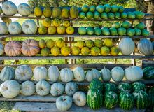 Melons, watermelons and pumpkins on the roadside market royalty free stock photo