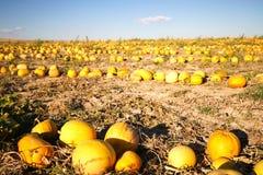 Melonu pole przy spadkiem Zdjęcie Royalty Free