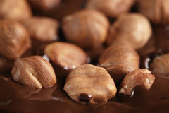 Melted dark chocolate with hazelnuts, making chocolate bar Royalty Free Stock Photography