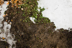 Melted snow on a field. Dirt and snow.  Sand and Snow. background. Ground texture with branch and twig in sping. Royalty Free Stock Image