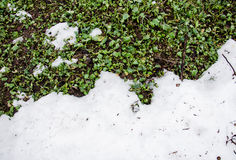 Melted snow on a field grenn grass. Dirt and snow.  Sand and Snow. background. Ground texture with branch and twig in Stock Photo